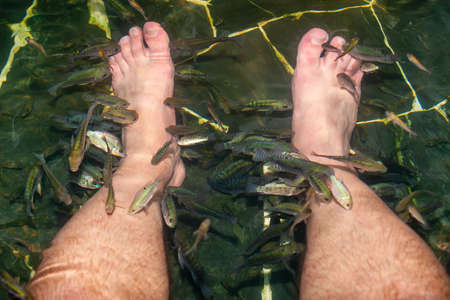 Feet peeling with Garra rufa fish. Pool with fish, which make peeling of the mens legs.