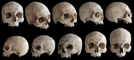 Human anatomy. A human skull without a jaw. Collection of rotations of the skull. Skull at different angles. Isolated on black background.