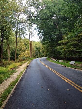 open road: Open road through the woods.