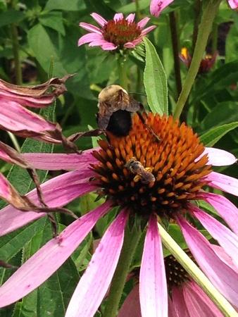 Close up on bees on flower Reklamní fotografie