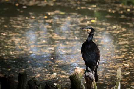 Cormorants on branches in water Stock Photo