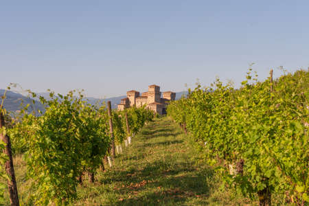 view of a castle from a vineyard on the Italian hills, landscape under the blue sky of Emilia Romagna Banco de Imagens