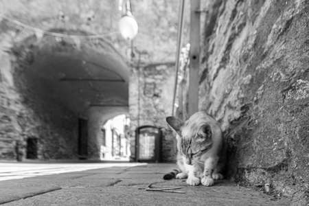 A cat observes a wooden twig on the ground in a street of a village, horizontal image in black and white