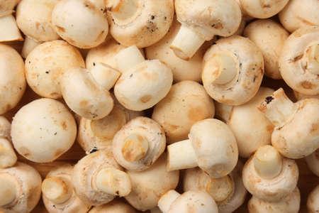 agaricus: Edible raw white mushrooms (Agaricus bisporus) Stock Photo