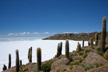 high plateau: View on the saltflats of salar de uyuni from fishermans island in Bolivia
