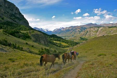 chalten: horses in Patagonia el chalten