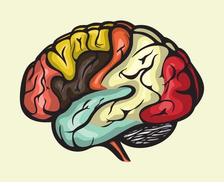 vista lateral del cerebro humano Ilustración de vector