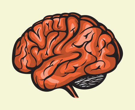 human brain Stock Vector - 15825645
