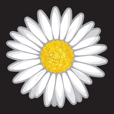 daisyflower: Daisy flower isolated on black
