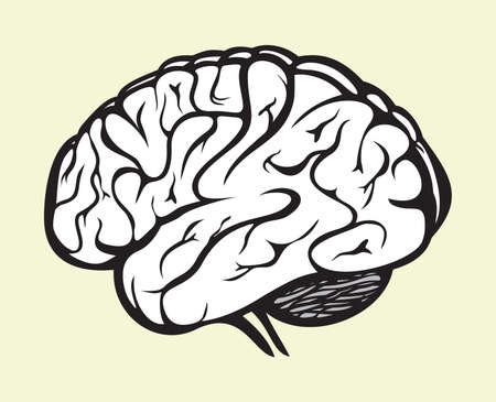 brain illustration: human brain