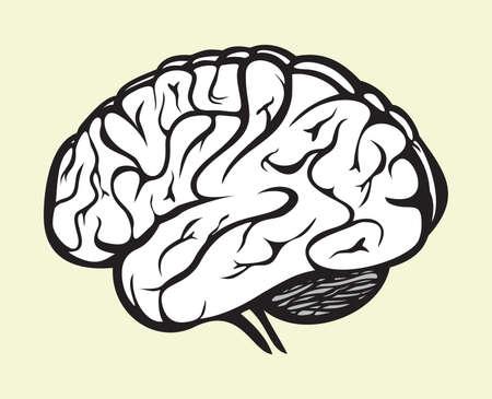 Isolierte Vektor Gehirn Und Rückenmark. Zentrales Nervensystem ...