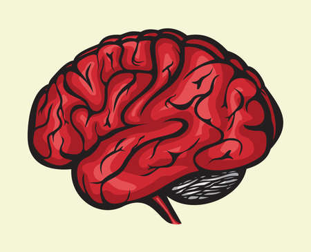 human brain Stock Vector - 15971460