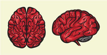 human brain Stock Vector - 16057699