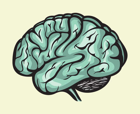 human brain Stock Vector - 16057694