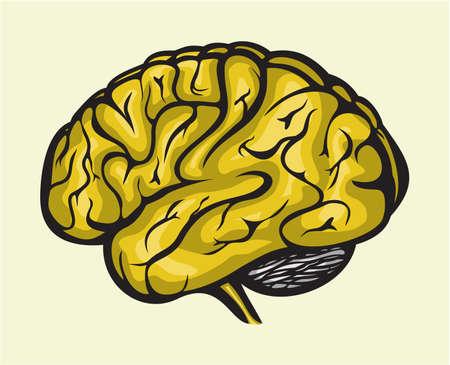 human brain Stock Vector - 18009714