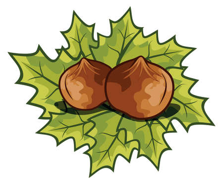Nuts filberts - hazelnut Stock Vector - 18158996