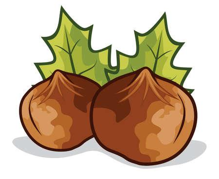 Nuts filberts - hazelnut Stock Vector - 18158990