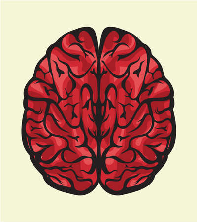 human brain Stock Vector - 18494377