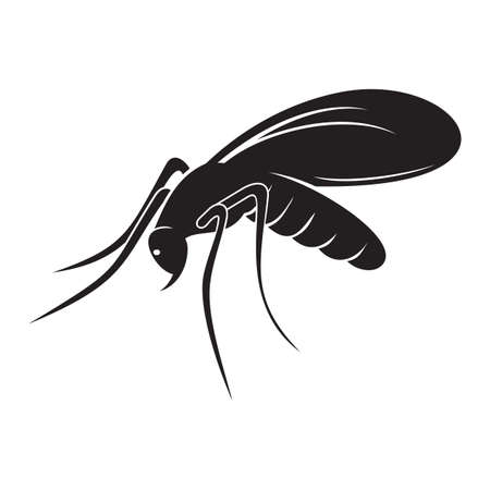 anopheles: mosquito Illustration