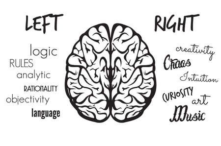 Le fonctionnement du cerveau
