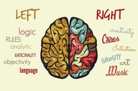 left right: Brain function