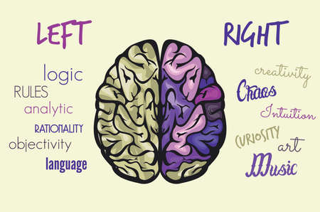 brain function: Brain function