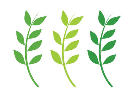 Branch icon Vector