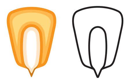 maiz: Ma�z icono semilla vector