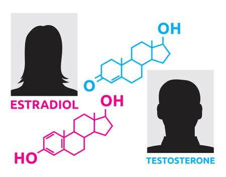 Hormones - estradiol and testosterone 일러스트