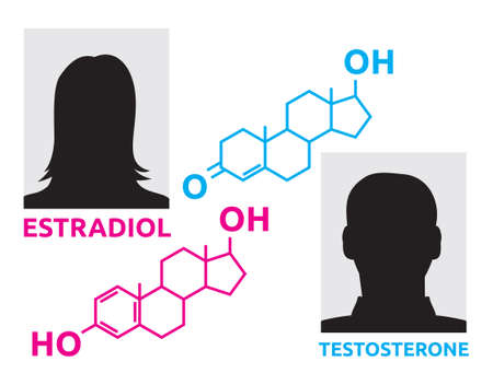 andropause: Hormones - estradiol and testosterone Illustration