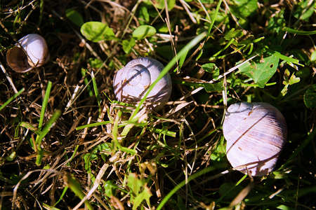 Three snails in the green grass on the ground