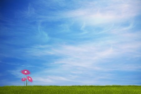 spring card with flower on a grass field with a nice sky Stock Photo - 6672851