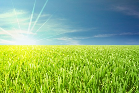 grass field: green grain field with nice cloudy blue sky Stock Photo