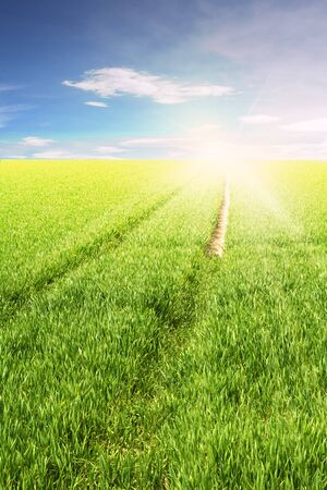 green field with a path to the sun and cloudy blue sky in back Stock Photo - 6946587