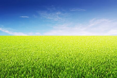 grassy field: nice natural green field with cloudy sky