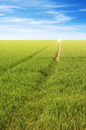 fresh green grass field with a path to horizon Stock Photo - 7055645