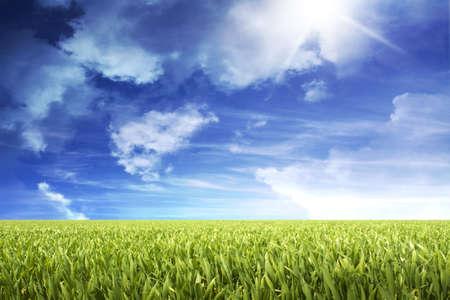 grassy field with nice sky Stock Photo - 8533724