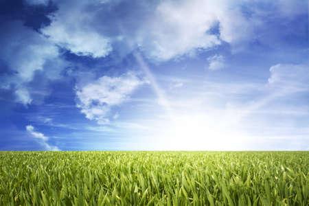 green grass field with sundown Stock Photo - 8533722