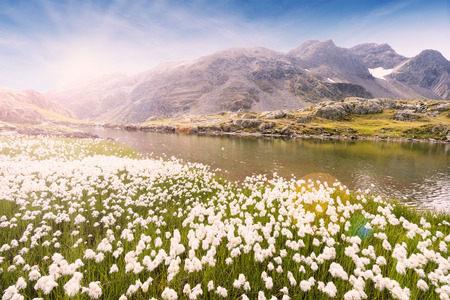 White mountain flowers at swiss alps mountain nature landscape