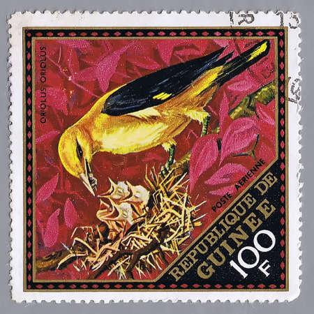 guinee: Republique de Guinee - CIRCA 1976: A stamp printed in Republique de Guinee shows image of birds, series, circa 1976  Stock Photo