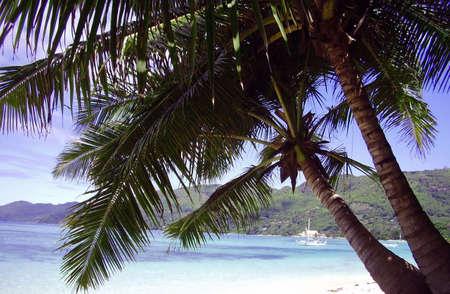On the beach of the island Mahe.Seychelles photo