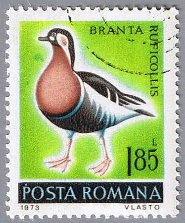 ROMANIA � CIRCA 1973: A stamp printed in Romania shows Branta ruficollis, series, circa 1973 Stock Photo - 7883779