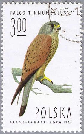 POLAND – CIRCA 1974: A stamp printed in Poland shows Falco tinnunculus, series devoted to the birds, circa 1974 Stock Photo