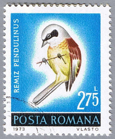 ROMANIA – CIRCA 1973: A stamp printed in Romania shows Remiz pendulinus, series, circa 1973 Stock Photo - 7883749