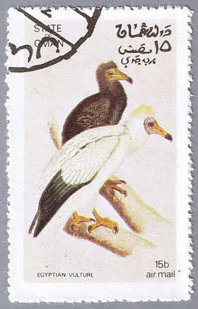 STATE OF OMAN � CIRCA 1972: A stamp printed in State of Oman shows Egyptian vulture, series devoted to the birds, circa 1972 photo