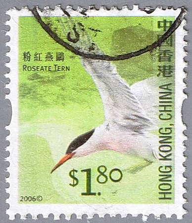 HONG KONG, CHINA - CIRCA 2006: A stamp printed in Hong Kong shows roseate tern, series devoted to the birds, circa 2006 Stock Photo - 7883748