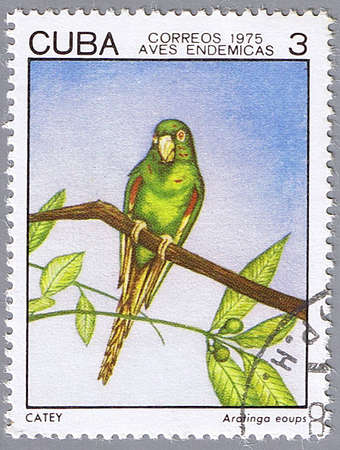 CUBA - CIRCA 1975: A stamp printed in Cuba shows Aratingo eoups, series devoted to the birds, circa 1975
