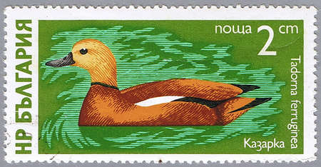 BULGARIA - CIRCA 1976: A stamp printed in Bulgaria shows ruddy shelduck, series, circa 1976 photo