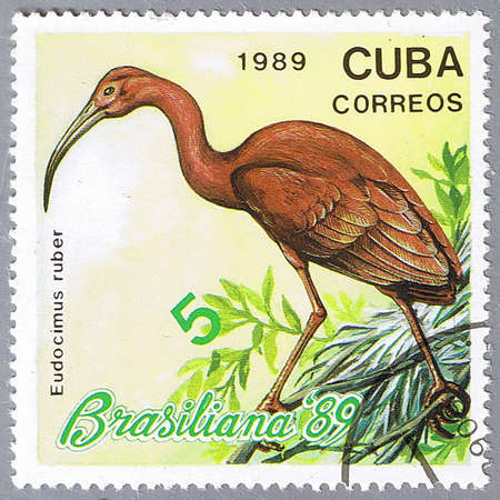 CUBA - CIRCA 1989: A stamp printed in Cuba shows Eudocimus ruber, series, circa 1989 photo