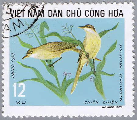 VIETNAM - CIRCA 1971: A stamp printed by Vietnam shows image of a bird Megalurus palustris, circa 1971 photo